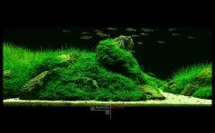 Фрагмент акваскейпа