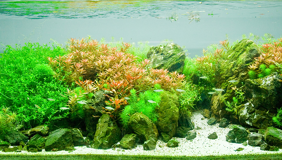 Фрагмент акваскепа Светличного