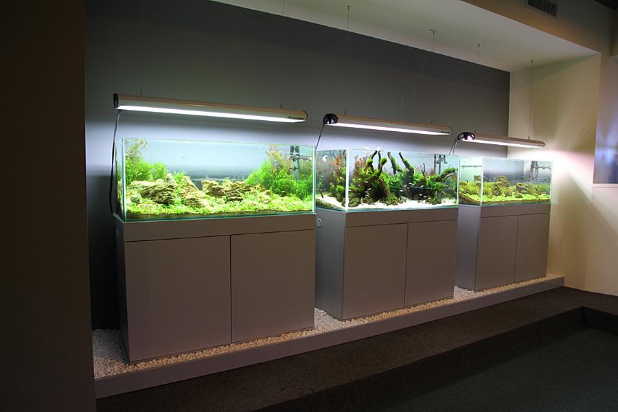 Постоянная выставка акваскейпов в Харькове