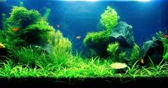аквариуму месяц