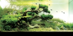 aquascapes 002