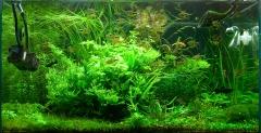 Экспериментальный аквариум на 08-02-2014