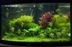 аквариуму 5 месяцев