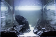 Небольшой акваскейп из 60л)
