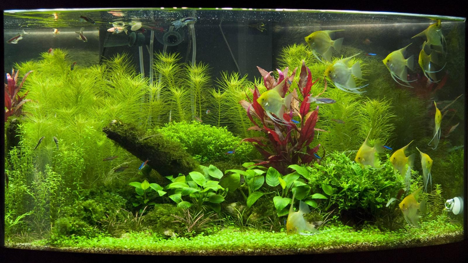 Травник в угловом аквариуме