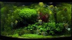 аквариуму 8 месяцев, с двумя т5