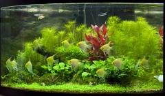 аквариуму 5,5 месяцев, очередные изменения