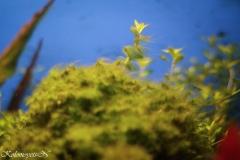 Заросший мох