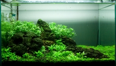 Травник-креветочник (первое фото)