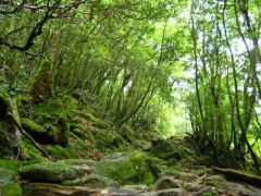 yaponiya udivitelnye lesa Na ostrove yakusima 8 558x418
