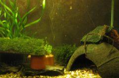 Дом макробрахиума
