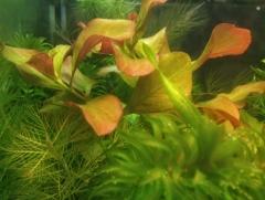 мой аквариум и растения
