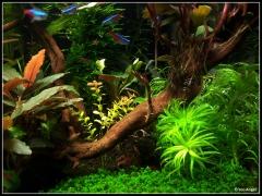 Мои растения