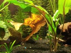 Фотки из моего акваса