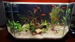 Перезапуск 85л аквариума