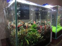 Куб 30 литров Джунгли