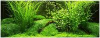 post-2520-0-02891100-1486236971_thumb.jpg