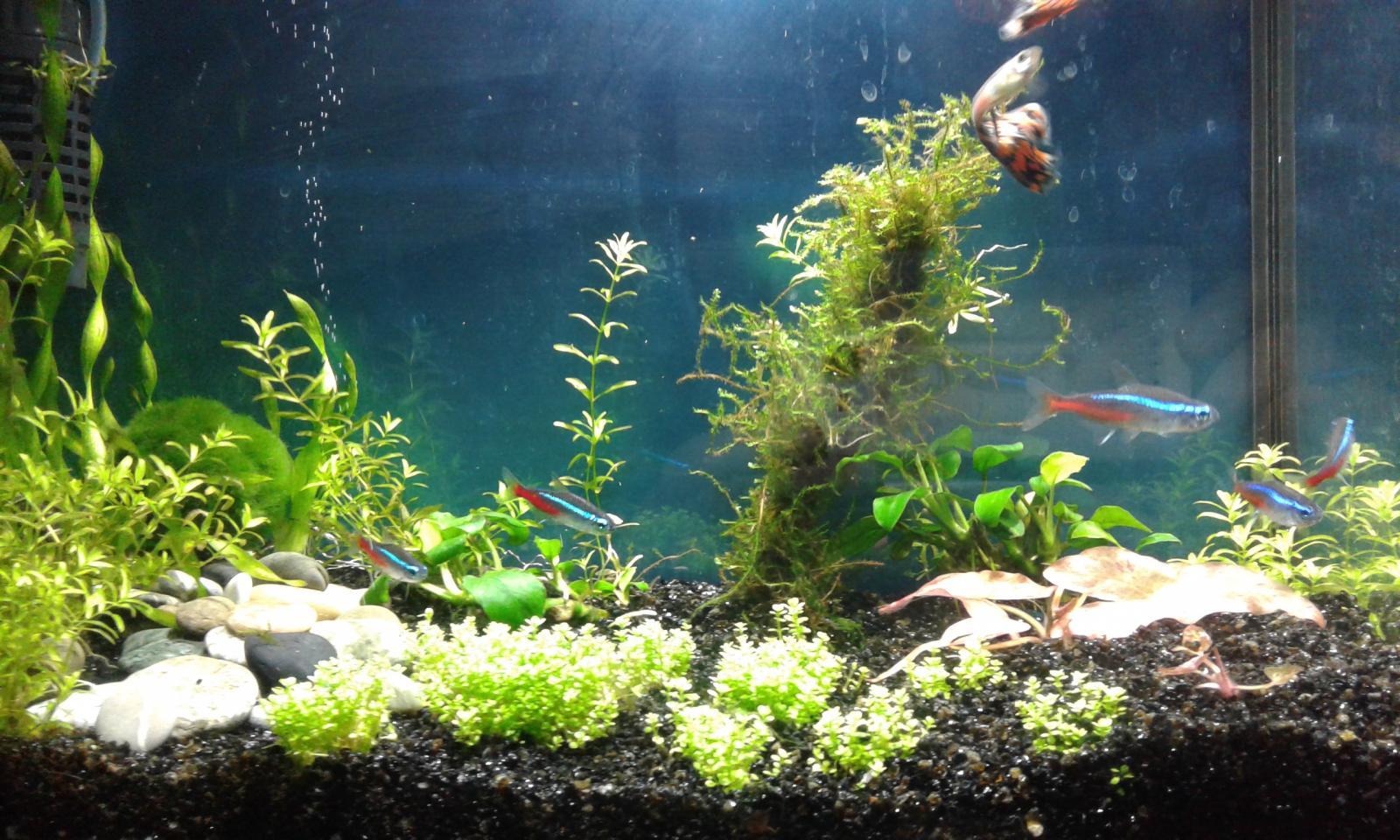 Как сделать воду в аквариуме мягче фото 199