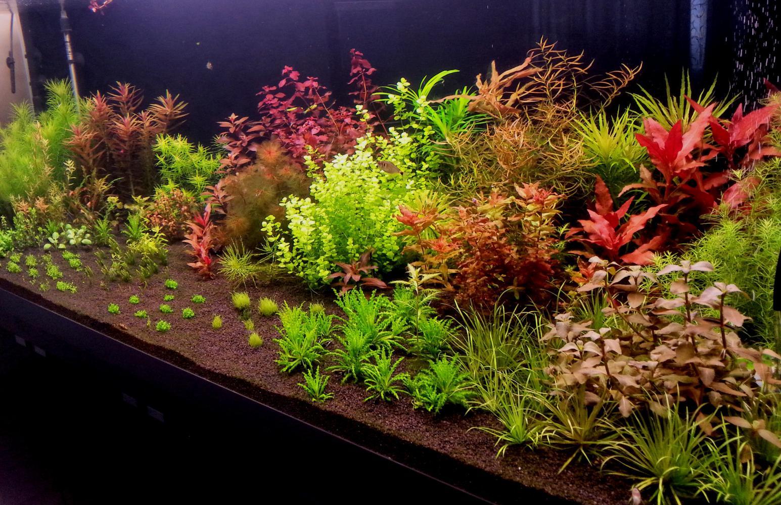 аквариумные цветы фото должно быть