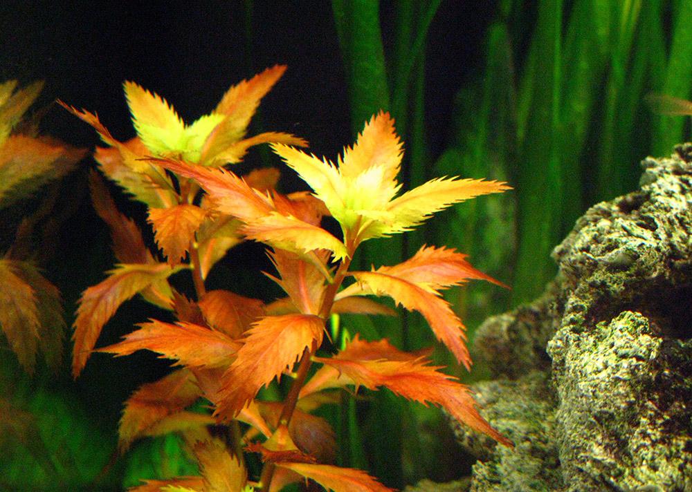 картинки из листьев аквариумных растений праздник