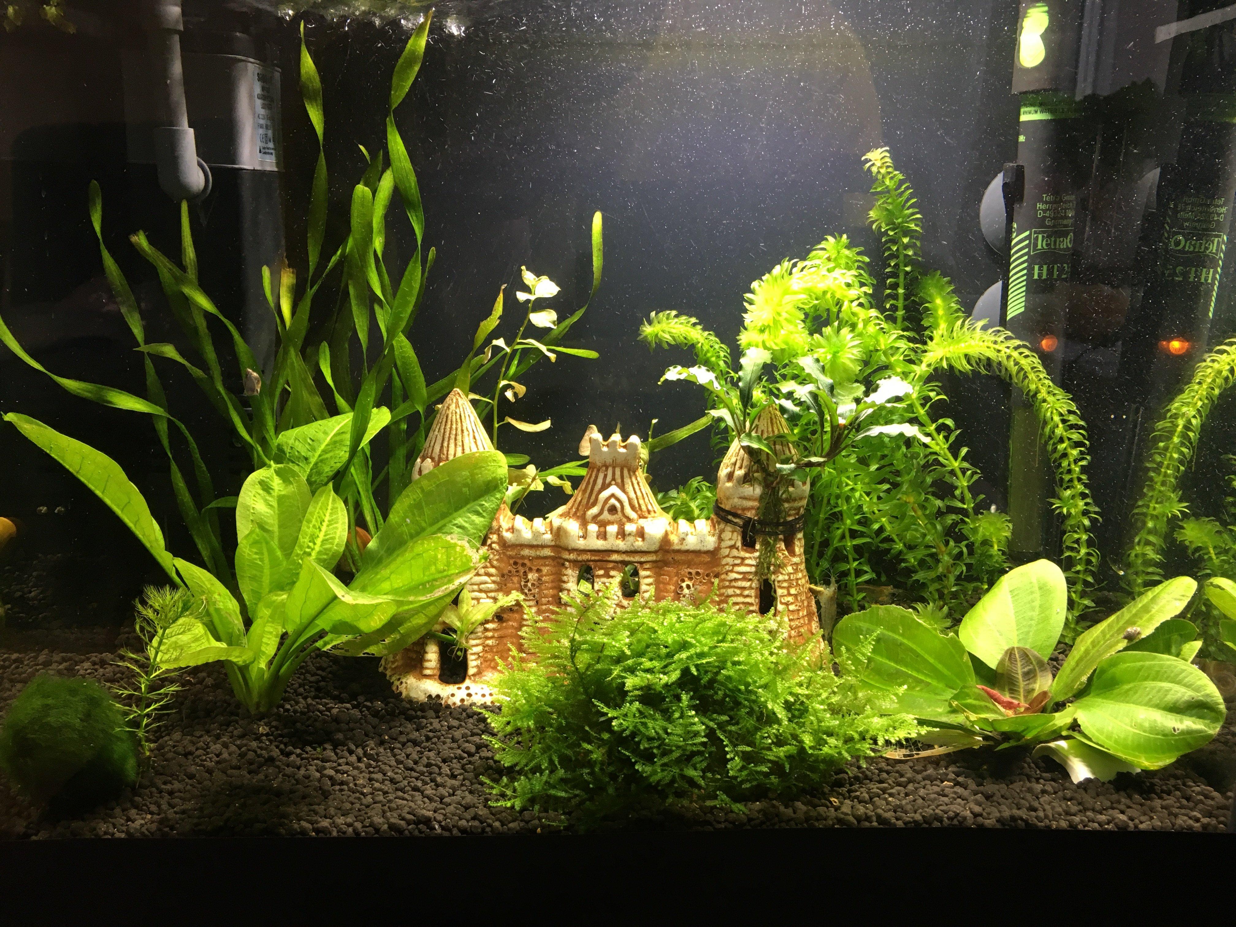 вылетающие границы фото оформления аквариумов с живыми растениями делаете, или планируете
