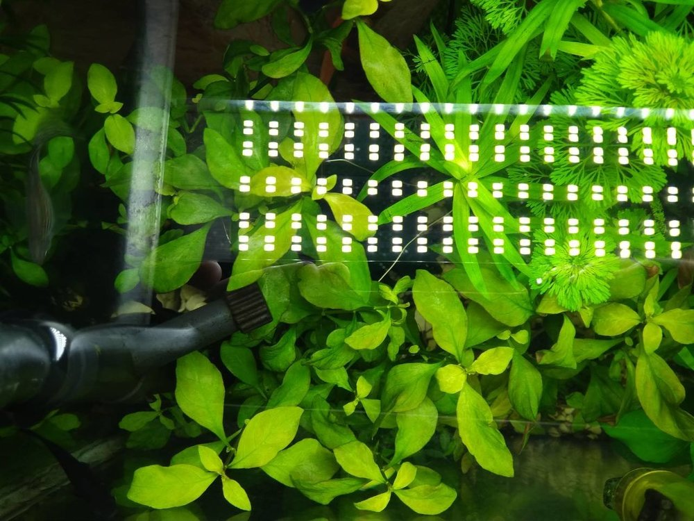 viber image 2019-04-01 , 18.33.59.jpg6.jpg