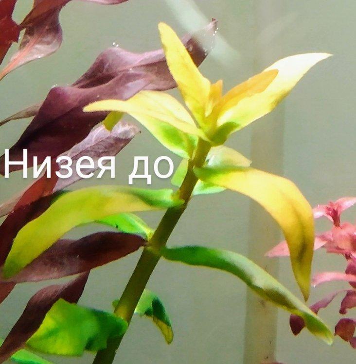 IMG_20200530_103448~3.jpg