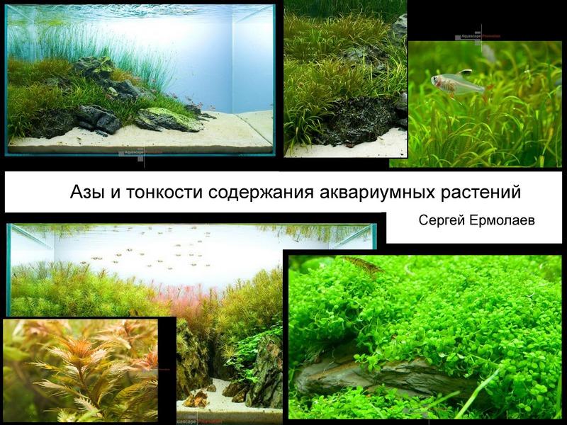аквариумы с растениями